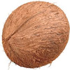 Organic Semi husked Matured coconut for Bulk exports for wholesale.