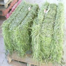 Timothy, Alfalfa, Orchard, Fescue, Bermuda, Grass Hay for sale
