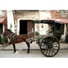 /product-detail/small-pony-drawn-tanga-two-wheels-black-horse-drawn-buggy-traditional-mini-horse-tanga-127804405.html
