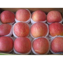 sale natrual 100% fruit price for fresh apple
