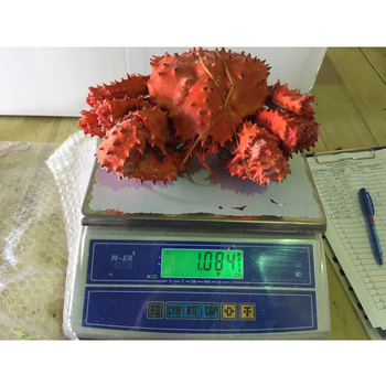 Export Quality Frozen Red King Crab From Russia at Least Price