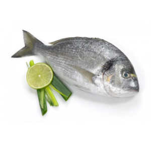 Top Quality Frozen Fish from Turkey Sea Bass Bream and others