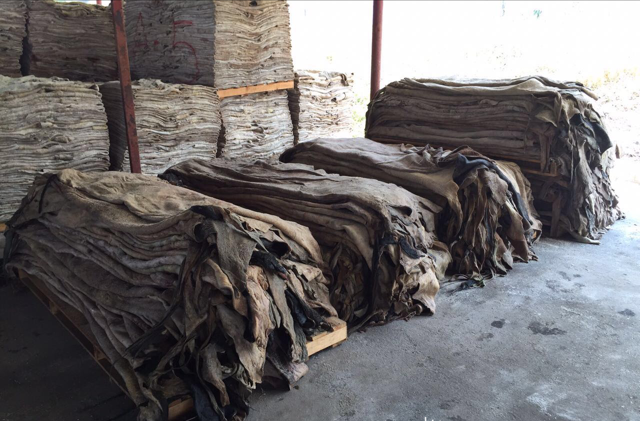 Premium Dry and Salted Cow/Goat/ Donkey and Horse Skin and Hides Bulk Sales