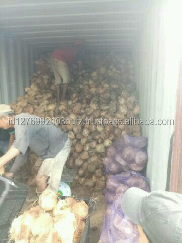 Fresh Mature coconut indonesia