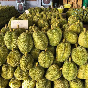 Fresh Durian High Quality from Thailand.