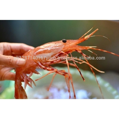 Canadian Shrimp Frozen Peony Shrimp Alive Peony Shrimp Fresh Peony Shrimp View Frozen Small Shrimp Markhor Foods Product Details From Markhor Group On Alibaba Com