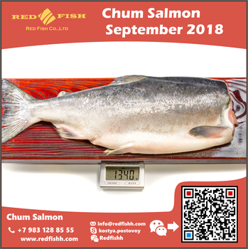 Chum Salmon Headless and Gutted from Sakhalin Russia