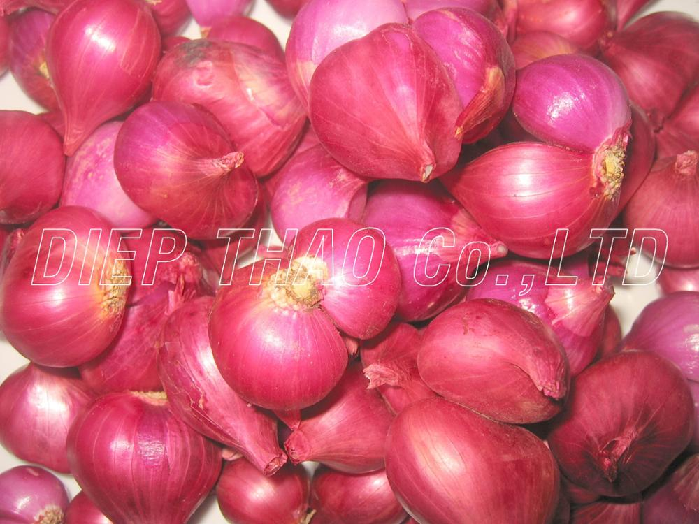 FRESH RED ONION/ RED SHALLOT EXPORT