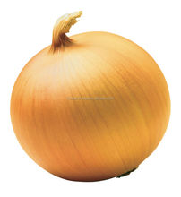 best type of ONION FRESH STYLE\ HIGH QUALITY