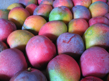 HIGH QUALITY FRESH MANGO