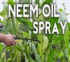 Natural Insecticide 100 % Pure Terra Neem Oil from GMP/ ISO factory