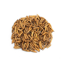 (High) 저 (급 잔 고정 말린 Mealworms 대 한 새