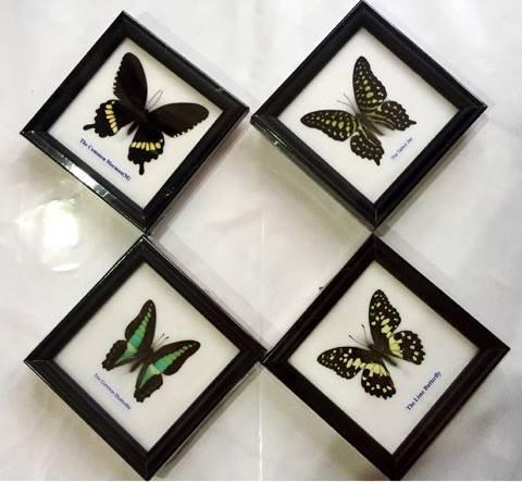 Cheap Framed Real Butterflies, find Framed Real Butterflies deals on ...