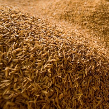 Raw Rice Husk Biomass fuel
