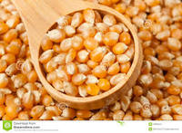 best quality iqf frozen sweet corn yellow corn best price