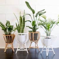 Rattan plant pot holder, handcrafted in Vietnam