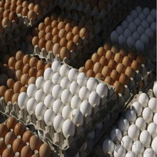 Fresh Table Eggs White and Brown Chicken Eggs At Best Market Price