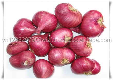 NO.1 QUALITY INDIAN ONION FOR SELLING BESR PRICE
