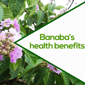 Image result for banaba tea