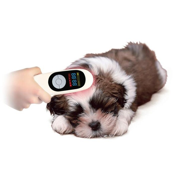 cold laser therapy 808nm pain relief laser device