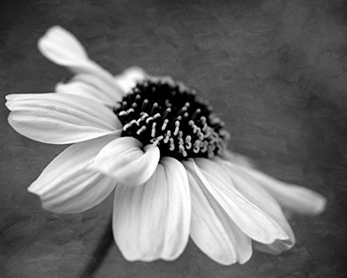 Cheap Black And White Flower Wall Art, find Black And White Flower ...
