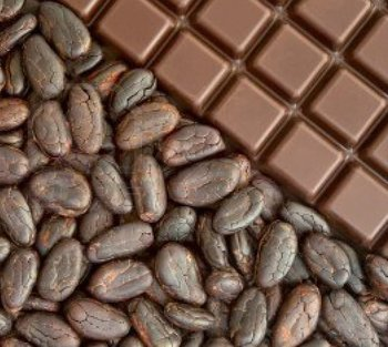 Best Quality Cocoa Beans Chocolate For Sell