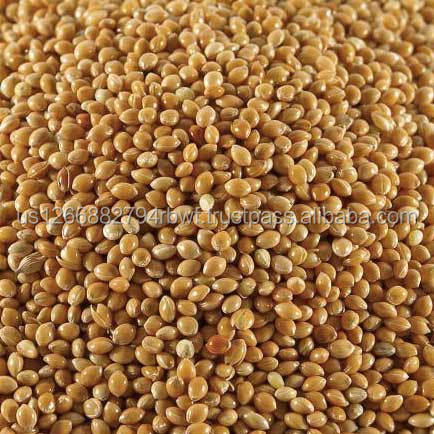 Brand new and fresh, organic sorghum at low cost