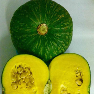 Fresh Japanese pumpkins (Kabocha) from central highland of Vietnam
