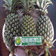 FROZEN FRESH ORGANIC PINEAPPLES WITH LARGE QUANTITY