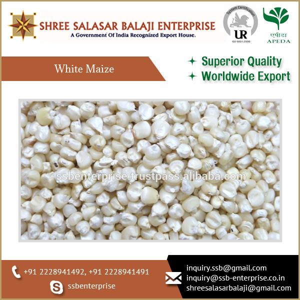 2018 Hot Selling Bulk Natural Taste White Corn Maize Buyers - Buy White  Maize,White Corn Maize,White Maize Export Product on Alibaba com