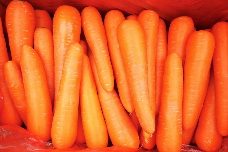 china fresh carrots seeds vegetables price list for dubai