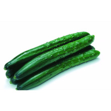 fresh cucumber sales,egyptian cucumber,price of fresh cucumber