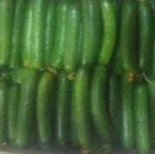 Fresh egyptian Cucumber high quality
