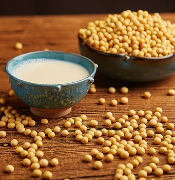 Stock Salted and Roasted Yellow Soya Bean , Crispy Yellow Soybean