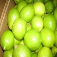 First grade Lemon and lime for sale