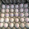 White Chicken Egg Supplier To Maldives/Singapore/Yemen/Syria/Israel