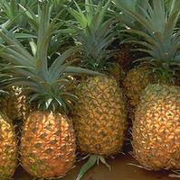 Natural Fresh Juicy Pineapple / High Quality Low Price
