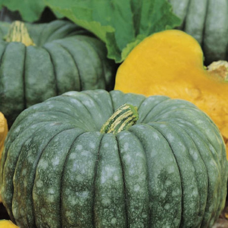 сорта тыквы с фото зеленого цвета считается одним самых