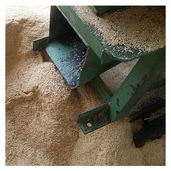 Rubber Wood Sawdust / Wood Chips / Wood Shaving From Thailand