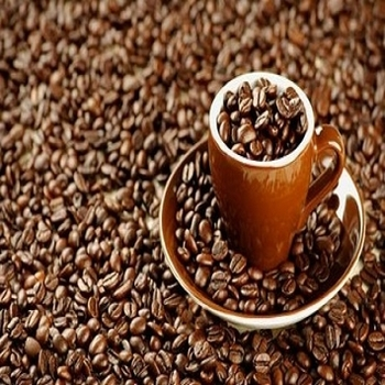 COFFEE BEANS BEST PRICE FROM MANUFACTURER TO BUYERS