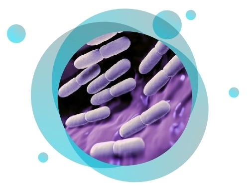 Probiotics Powder Immune Booster Dietary Supplement 30 sachets/ box