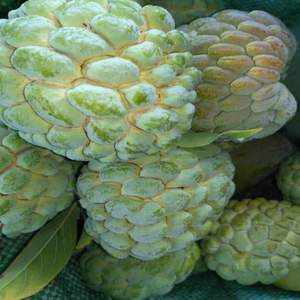 Fresh Egyptian custard apple - custard apple to Russia