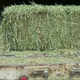 Buy high quality premium alfalfa hay