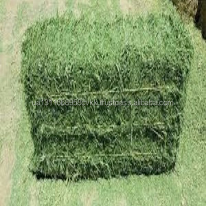 High Quality Animal Feed Alfalfa Hay From Ukraine