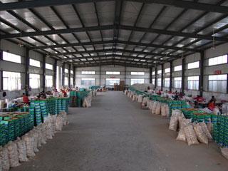 market onions prices export to dubai market