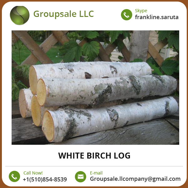Extensively Demanded Optimum Quality White Birch Log Available in Various Sizes