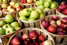 High quality Fuji Fresh Apples Export Price