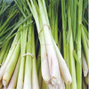 BEST PRICE - HIGH QUALITY - COMPETITIVE PRICE OF FRESH LEMONGRASS