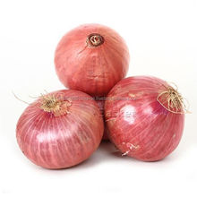 farm lowest price fresh red onion and yellow onion red onion 20kg from Thailand