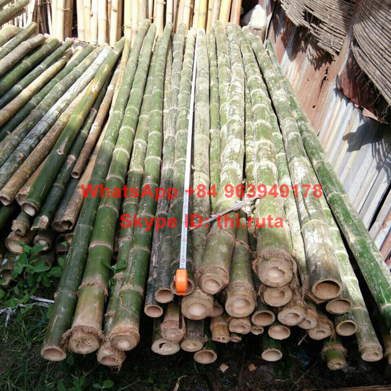 Slim Bamboo Pole Raw Bamboo Canes Large And Dry Materials